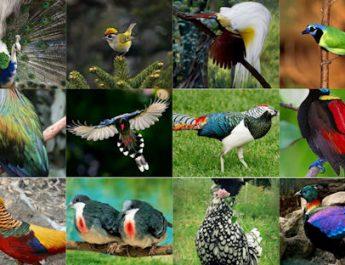 Uncategorized Juli 1, 2019 20 Jenis Burung Indonesia Yang Di Lindungi