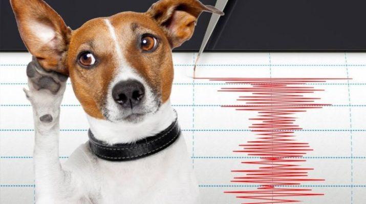 Beberapa Hewan Ini Bisa dengan Peka Mengetahui Akan Terjadi Bencana Alam