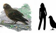 Fosil Burung Nuri Setinggi Anak bocah Umur 4 Tahun Ditemukan di Selandia Baru