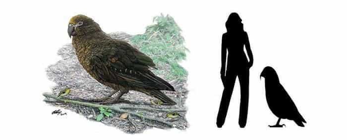 fosil burung nuri seukuran anak 4 tahun