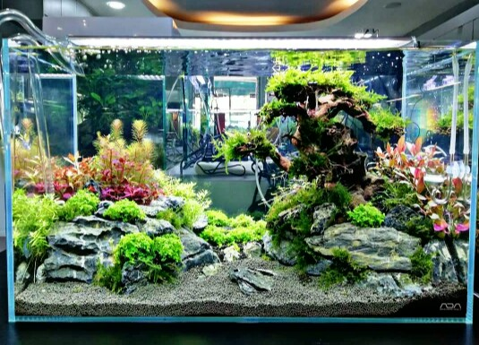 10 Jenis Aquascape, Contoh dan Cara Membuatnya Aquascape