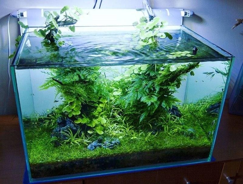 Contoh-Aquarium-Aquascape